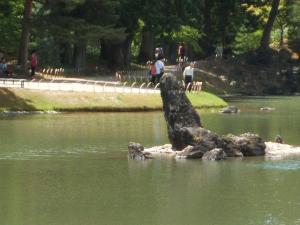 毛越寺あやめ祭り2013-06-22-084
