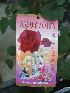 花巻薔薇園2013-06-23-051