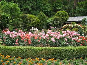 花巻薔薇園2013-06-23-058