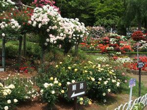 花巻薔薇園2013-06-23-056