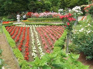 花巻薔薇園2013-06-23-054