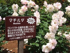 花巻薔薇園2013-06-23-069