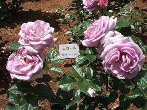 花巻薔薇園2013-06-23-068