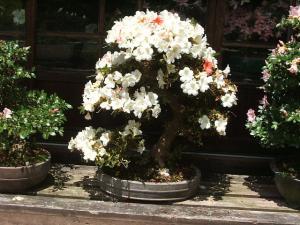 花巻薔薇園2013-06-23-075