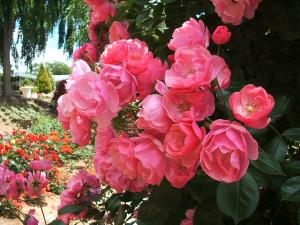 花巻薔薇園2013-06-23-080