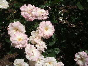 花巻薔薇園2013-06-23-094