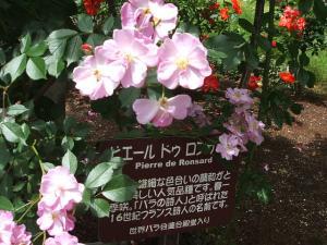 花巻薔薇園2013-06-23-103