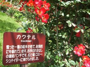 花巻薔薇園2013-06-23-100