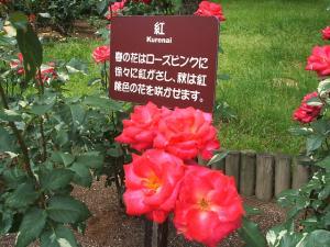 花巻薔薇園2013-06-23-109