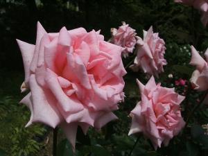花巻薔薇園2013-06-23-116