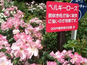花巻薔薇園2013-06-23-113