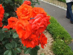 花巻薔薇園2013-06-23-121