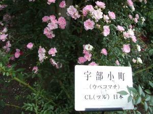花巻薔薇園2013-06-23-136
