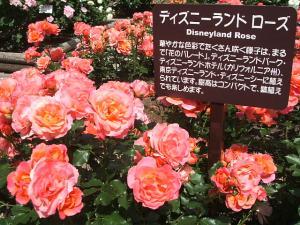 花巻薔薇園2013-06-23-145