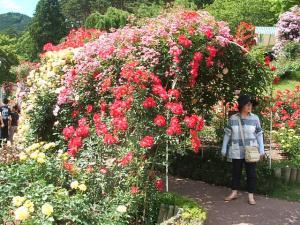花巻薔薇園2013-06-23-154
