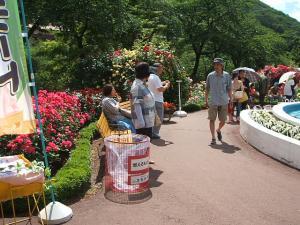 花巻薔薇園2013-06-23-150