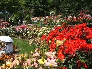 花巻薔薇園2013-06-23-149