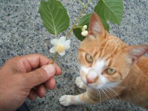 猫にマタタビ032