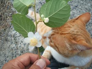 猫にマタタビ033