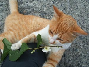 猫にマタタビ040