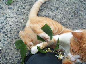 猫にマタタビ037