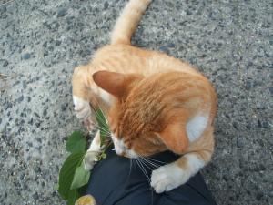 猫にマタタビ041