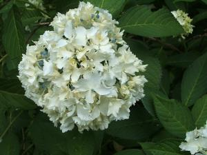 紫陽花園2013.07.06.030