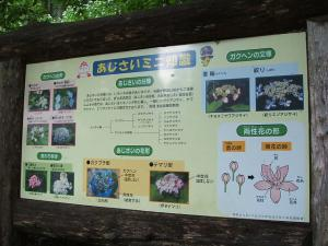 紫陽花園2013.07.06.079