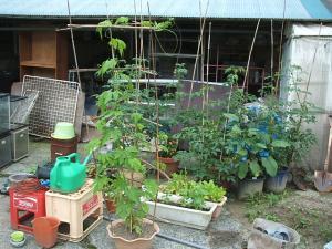家庭菜園2013-07-14-001