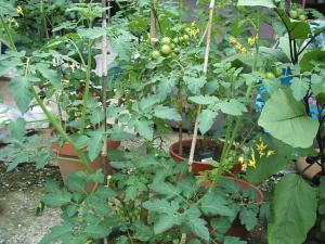 家庭菜園2013-07-14-008