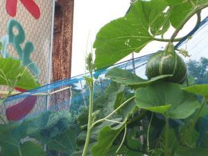 家庭菜園2013-07-14-027