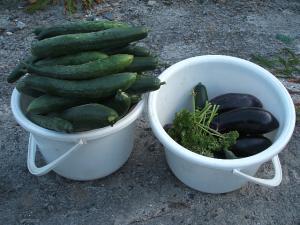 収穫2013-07-21-001