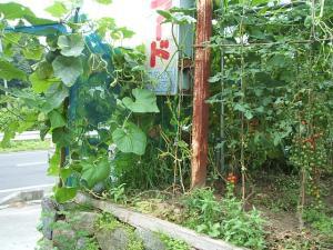 菜園2013-07-30-0002