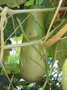 菜園2013-07-30-0008