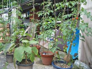 a菜園2013-07-30-4