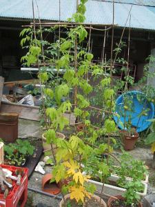 a菜園2013-07-30-2