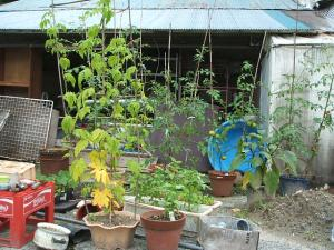 a菜園2013-07-30-1