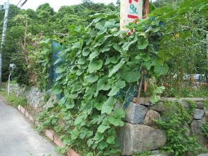 ss菜園2013-07-30035