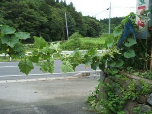 菜園2013-08-02-014