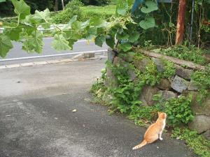 菜園2013-08-02-012