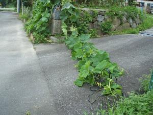 菜園2013-08-02-017