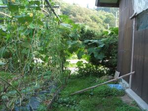 家庭菜園2013-08-07-013