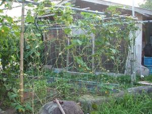 家庭菜園2013-08-07-008
