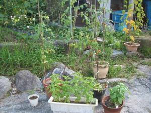 家庭菜園2013-08-07-016