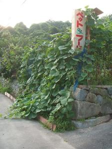 家庭菜園2013-08-07-034