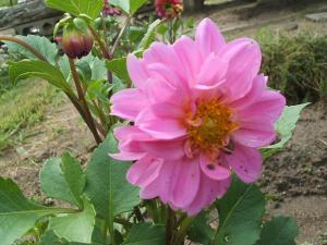 ふれあい花壇2013-08-27-016