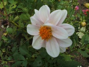 ふれあい花壇2013-08-27-015