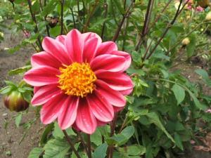 ふれあい花壇2013-08-27-014