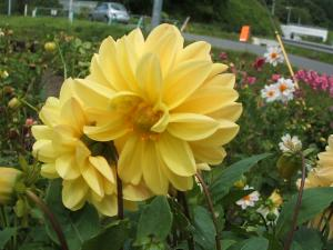 ふれあい花壇2013-08-27-013
