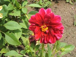 ふれあい花壇2013-08-27-012